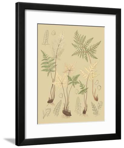 Nature's Lace II-C^e^ Faxon-Framed Art Print