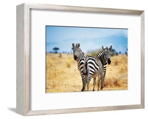Le Zebre A Deux Tetes-Pierre Douay-Framed Art Print
