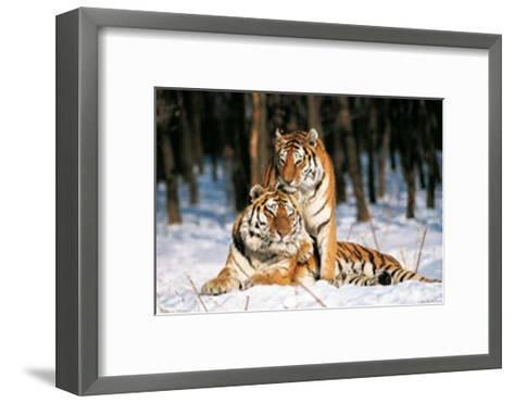 Tigres-Gilles Santantonio-Framed Art Print