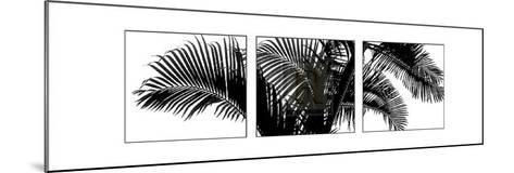 Palm Frond Triptych III-Bill Philip-Mounted Art Print