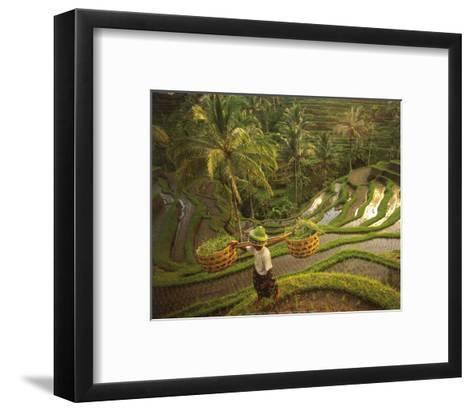 Riziere-Bali-Diagentur-Framed Art Print