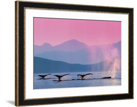 Whales--Framed Art Print