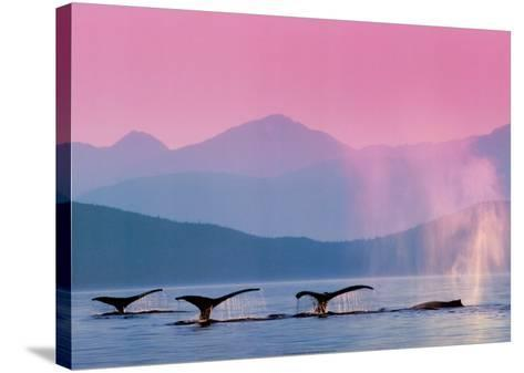 Whales--Stretched Canvas Print