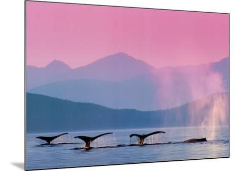 Whales--Mounted Art Print