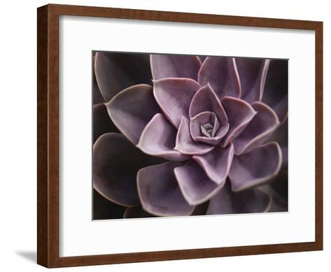 Echeveria I-Andrew Levine-Framed Art Print