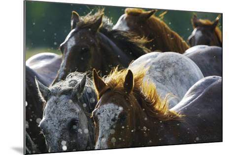 Splash 'n Dash-David R^ Stoecklein-Mounted Art Print