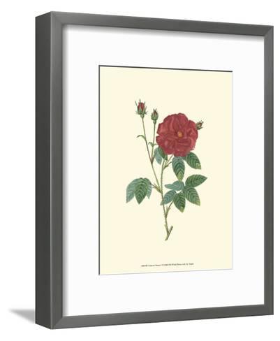 Crimson Beauty I-Turpin-Framed Art Print