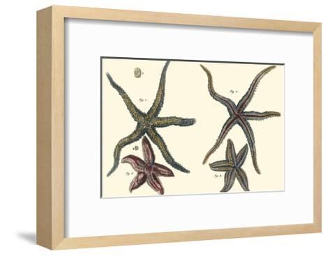 Sea Shells IX-Denis Diderot-Framed Art Print