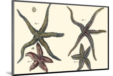 Sea Shells IX-Denis Diderot-Mounted Art Print