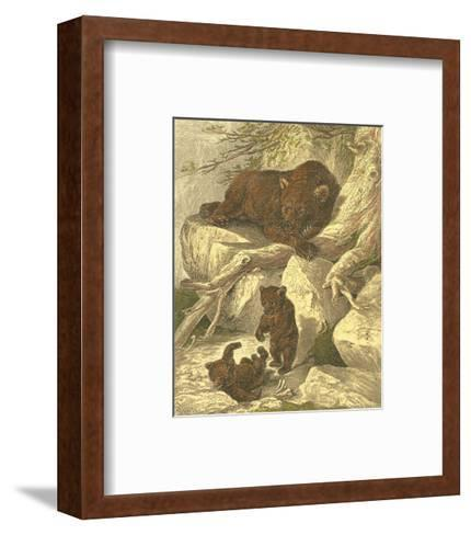 Small Brown Bear-Friedrich Specht-Framed Art Print