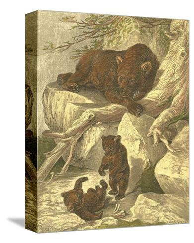 Small Brown Bear-Friedrich Specht-Stretched Canvas Print