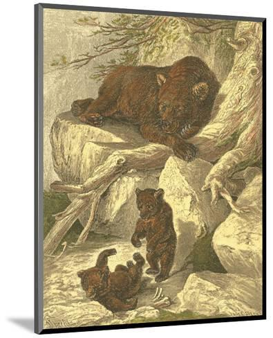 Small Brown Bear-Friedrich Specht-Mounted Art Print