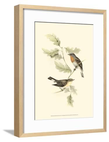 Red-Breasted Fly-Catcher-John Gould-Framed Art Print