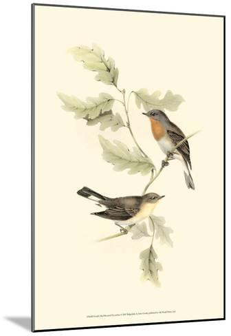 Red-Breasted Fly-Catcher-John Gould-Mounted Art Print