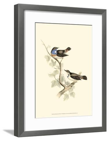 Blue-Throated Warbler-John Gould-Framed Art Print
