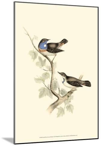 Blue-Throated Warbler-John Gould-Mounted Art Print