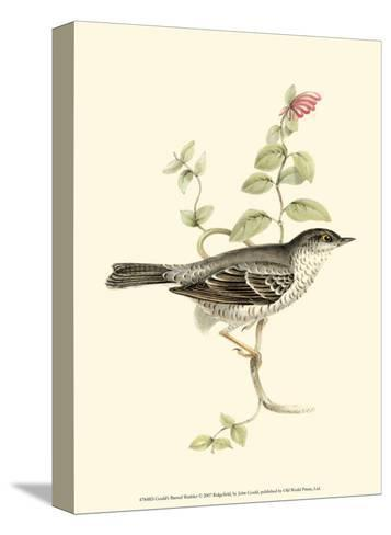 Barred Warbler-John Gould-Stretched Canvas Print