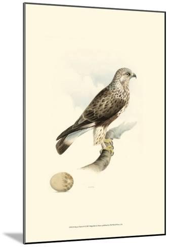 Meyer's Hawk II-Meyer-Mounted Art Print