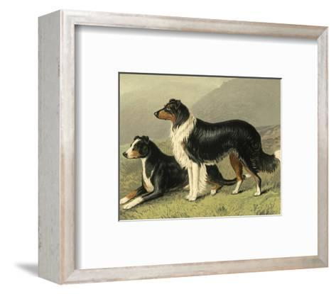 Sheep Dogs-Vero Shaw-Framed Art Print