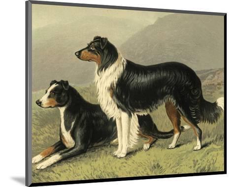 Sheep Dogs-Vero Shaw-Mounted Art Print