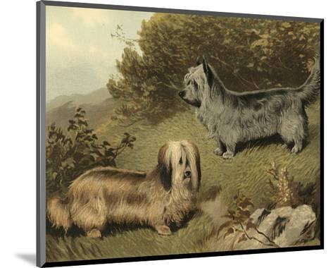 Terriers-Vero Shaw-Mounted Art Print