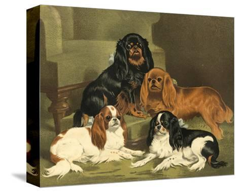 Toy Spaniels-Vero Shaw-Stretched Canvas Print