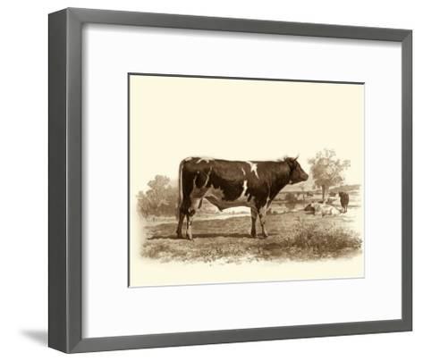 Bovine IV-Emile Van Marck-Framed Art Print