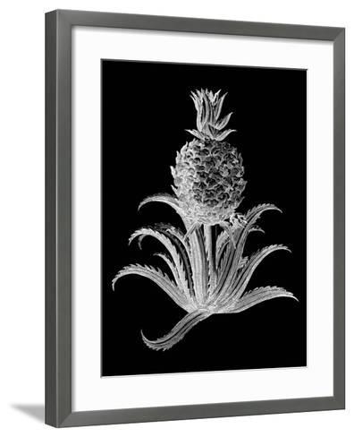 Pineapple Noir II--Framed Art Print