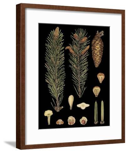Dramatic Conifers IV--Framed Art Print