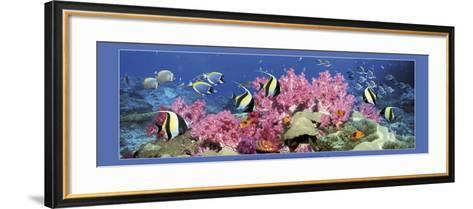 Under the Sea-Georgette Douwma-Framed Art Print