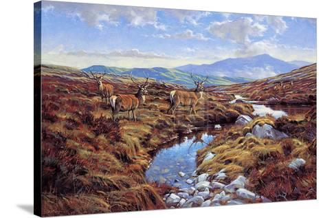 Stags-Peter Munro-Stretched Canvas Print