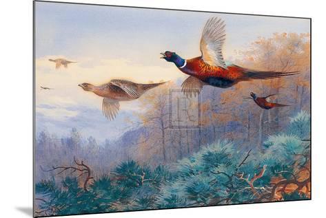 Pheasants in Flight-Archibald Thorburn-Mounted Art Print
