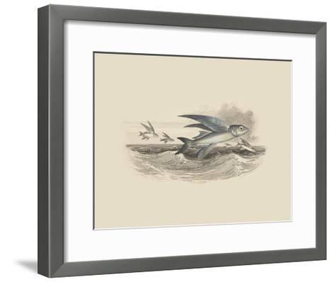 Flying Fish I--Framed Art Print