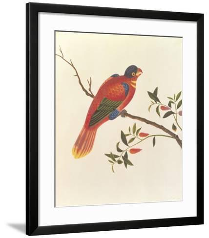 Red Parrot--Framed Art Print