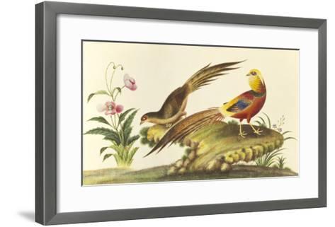 Pheasants--Framed Art Print