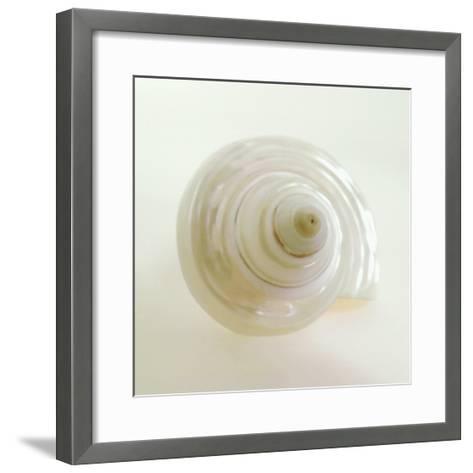 Shell IV-Darlene Shiels-Framed Art Print