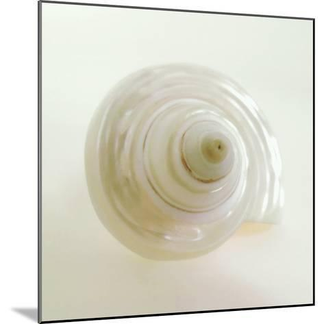 Shell IV-Darlene Shiels-Mounted Art Print