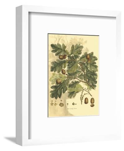 Antique Oak Tree-John Miller (Johann Sebastien Mueller)-Framed Art Print