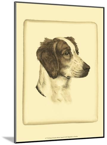 Danchin Brittany Spaniel-Danchin-Mounted Art Print