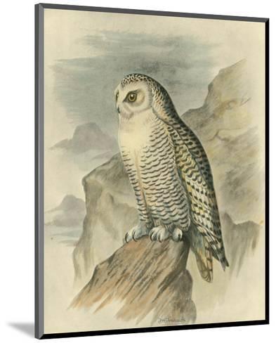 Snowy Owl-F^w^ Frohawk-Mounted Art Print