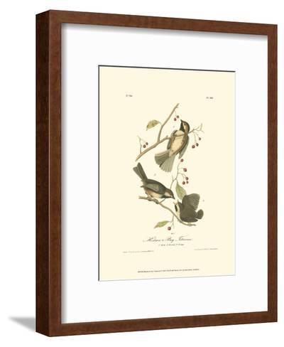 Hudson's Bay Titmouse-John James Audubon-Framed Art Print