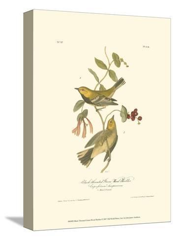 Black-Throated Green Wood Warbler-John James Audubon-Stretched Canvas Print