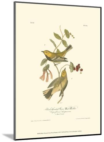 Black-Throated Green Wood Warbler-John James Audubon-Mounted Art Print