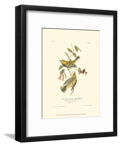 Black-Throated Green Wood Warbler-John James Audubon-Framed Art Print