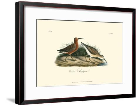 Curlew Sandpiper-John James Audubon-Framed Art Print