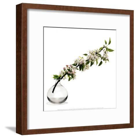 Branche de Pommier-Stephane De Bourgies-Framed Art Print
