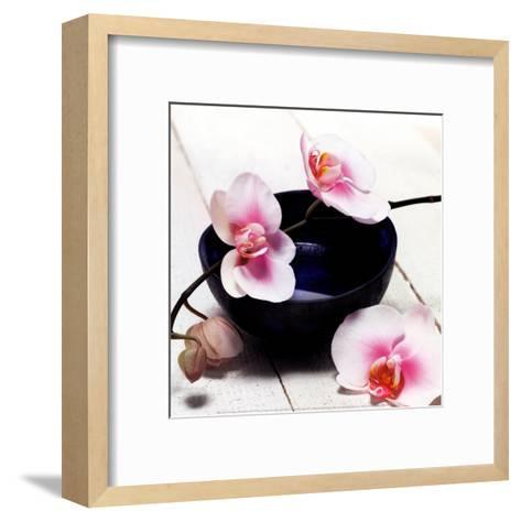 Orchid in a Bowl-Stephane De Bourgies-Framed Art Print