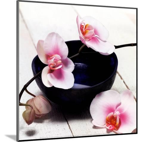 Orchid in a Bowl-Stephane De Bourgies-Mounted Art Print