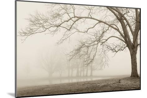 Layers of Trees I-Igor Svibilsky-Mounted Art Print