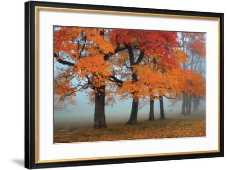 Burst of Colors-Olga Sergyeyeva-Framed Art Print